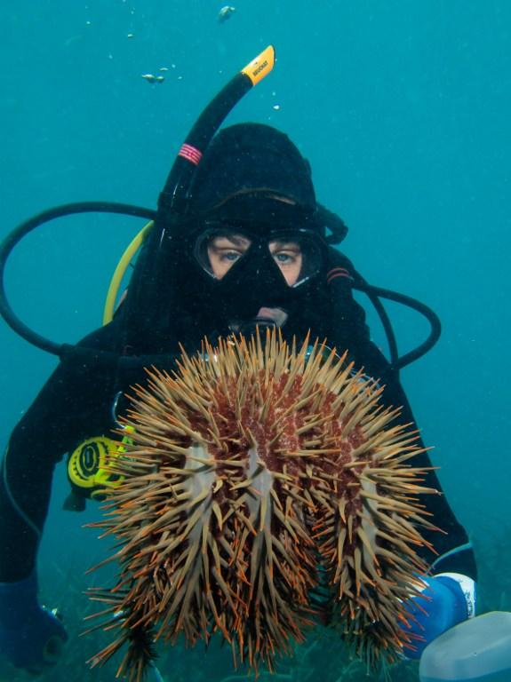 """ของในครัว """"น้ำส้มสายชู"""" ช่วยกอบกู้แนวปะการัง """"เกรทแบริเออร์รีฟ"""""""