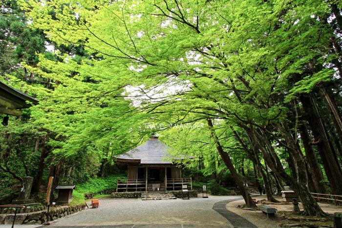 หอธรรมกับบรรยากาศแวกล้อมด้วยต้นไม้เขียวครึ้มอันสงบร่มรื่น