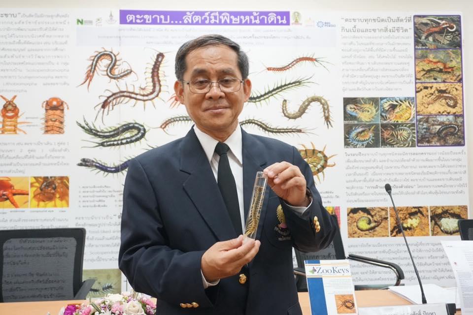 """นักวิจัยไทยค้นพบ """"ตะขาบน้ำตก"""" ติดอันดับ 10 สุดยอดสปีชีส์ใหม่โลก"""