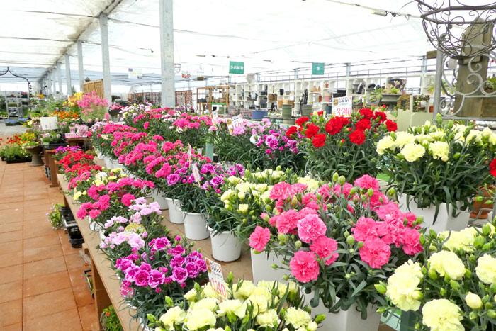 ดอกไม้หลากหลายในโรงเรือนหลัก