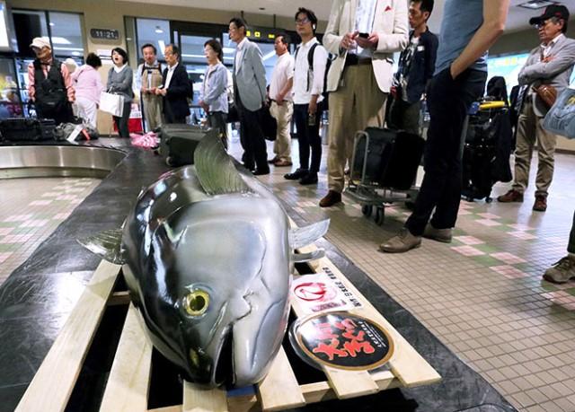 """ญี่ปุ่นงง! รอกระเป๋าที่สนามบิน เจอ """"ปลาทูน่ายักษ์"""" (ชมคลิป)"""