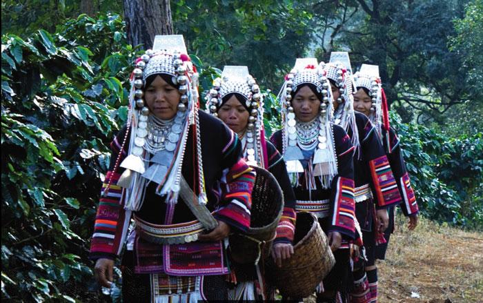 มีส่วนสร้างรายได้ให้แก่ชาวไทยภูเขา