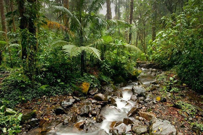 โบเกเต ประเทศปานามา  (ภาพ Booking.com)