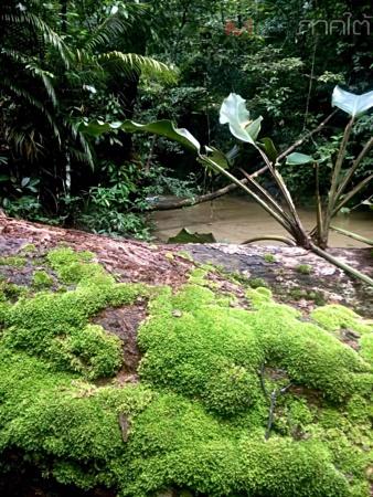 สภาพบริเวณป่าต้นน้ำคลองต่ำในเขตป่าสงวนแห่งชาติเทือกเขาวังพา