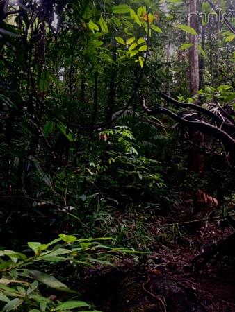 หมูป่า