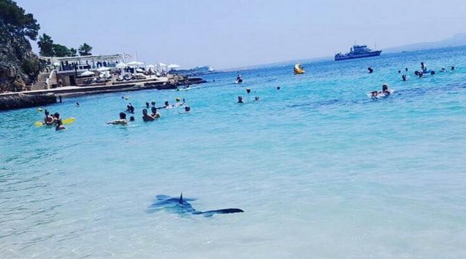 ภาพระทึก!!ฉลามแหวกว่ายกลางวงนักท่องเที่ยว หนีกันจ้าละหวั่น(ชมคลิป)