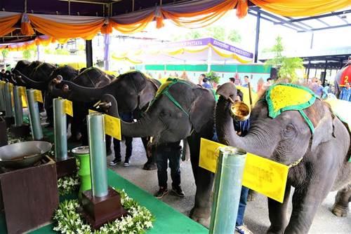 ผู้บริหาร-ช้าง สวนนงนุช ร่วมหล่อเทียนพรรษา 9 วัน 9 วัด 9 ต้น