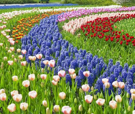 ตระการตา 7 จุดหมายยอดนิยม ชมทุ่งดอกไม้บาน