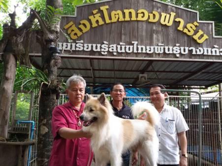 """บุกพิสูจน์ถึงฟาร์ม..ตามส่องสุนัขไทยแท้พันธุ์ """"บางแก้ว"""" ไม่ใช่ """"บางขวด""""(ชมคลิป)"""