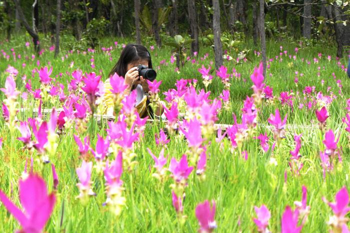 ที่ทุ่งดอกกระเจียว อช.ไทรทอง นักท่องเที่ยวสามารถหามุมถ่ายรูปได้ตามใจชอบในจุดที่อุทยานฯกำหนดไว้ให้ (ภาพ : 9 ก.ค.60)