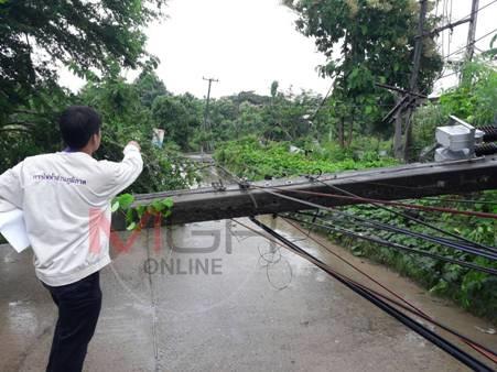 ระทึก! โพธิ์ยักษ์ล้มฟาดเสาไฟเชื่อมไทย-พม่าโค่น โดน จยย.สาวเจ็บ แม่สอด-เมียวดีไฟดับทั้งเมือง