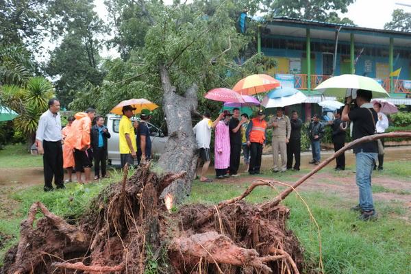ระทึก! พายุเซินกาพัดต้นประดู่ยักษ์ล้มทับอาคาร นักเรียนหนีตายอลหม่าน