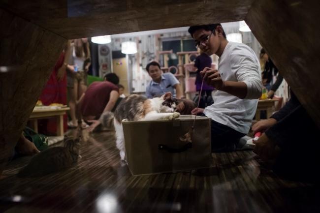 """""""คาเฟ่สัตว์เลี้ยง"""" เทรนด์ใหม่ในพม่า ตอบโจทย์คนรักสัตว์ชาวย่างกุ้ง"""