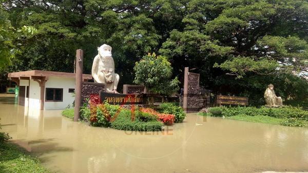 ลิง 800 ตัวหนีวุ่น! ปิดแหล่งท่องเที่ยววนอุทยานโกสัมพี หลังน้ำชีเอ่อท่วมสูง 2 เมตร(ชมคลิป)