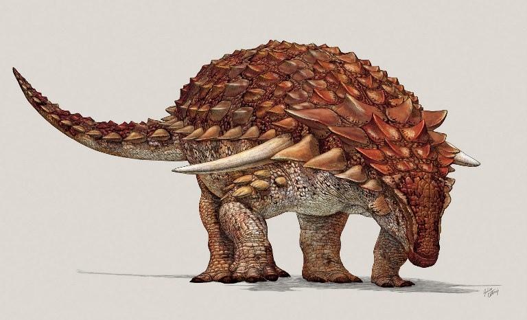ภาพวาดจำลองไดโนเสาร์กินพืชที่มีรูปร่างสมบูรณ์ที่สุดซึ่งได้รับความอนุเคราะห์จากฝ่ายบรรพชีวินวิทยา พิพิธภัณฑ์รอยัลไทร์เรลล์  ซึ่งจัดแสดงที่พิพิธภัณฑ์ (Royal Tyrrell Museum of Paleontology / AFP)
