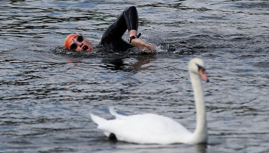 A swimmer passes a swan at the Serpentine Swimming Club in London, Britain August 6, 2017. REUTERS/Peter Nicholls