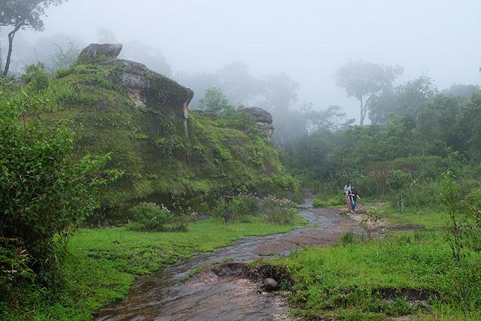 เส้นทางการเดินเดินชมธรรมชาติในอุทยานแห่ชาติภูหินร่องกล้า