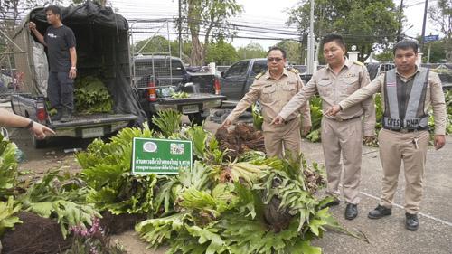 ตร.ตราดจับ 5 ผู้ต้องหา นำพืชหวงห้ามกว่า 600 ต้นเข้าประเทศ