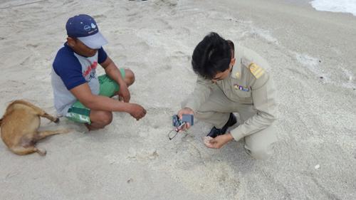 ประมงจ.ระยอง ลงเก็บหลักฐาน ซากหอยกระโดดตายเกลื่อนหาดแม่รำพึง หาสาเหตุ
