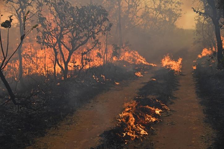"""InClip:เกิดไฟป่าครั้งใหม่ในฝรั่งเศส ส่วน """"แอลเอ"""" อยพยพวุ่นวันเสาร์ หลังเจอไฟป่าครั้งประวัติศาสตร์"""