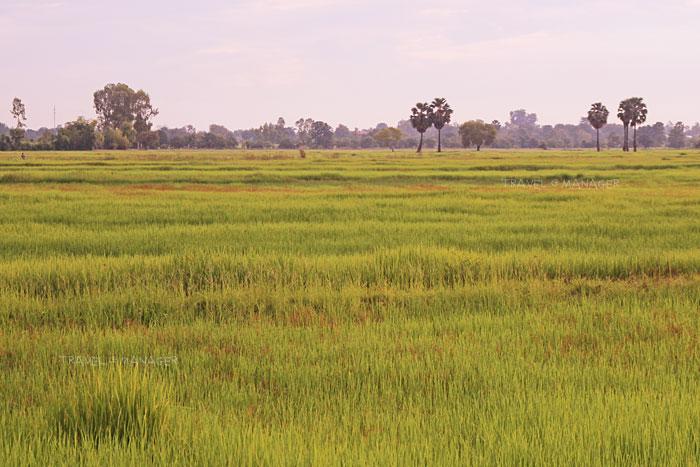 นาเขียวขจีในหมู่บ้าน