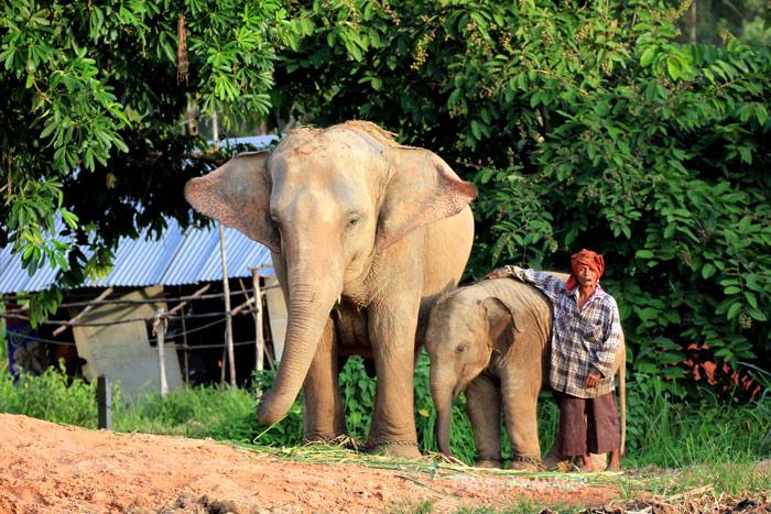 วิถีคน-ช้าง ผูกพันที่หมู่บ้านช้างตากลาง