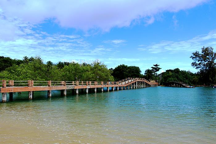 สะพานทอดข้ามลำคลองแห่งผืนป่าชายเลน