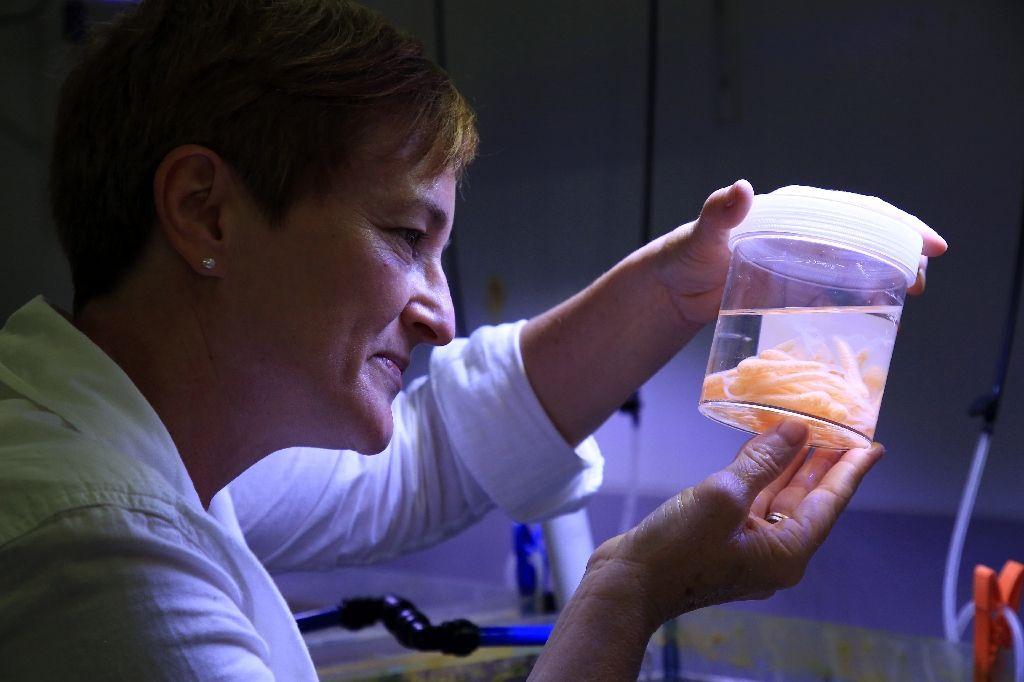 ดร.เชอรี มอตตี นักนิเวศวิทยาเคมีทางทะเล หัวหน้าทีมโครงการขยายพันธุ์หอยทากยักษ์แปซิฟิก ภายในห้องปฏิบัติการที่ควีนแลน (AFP Photo/Handout)