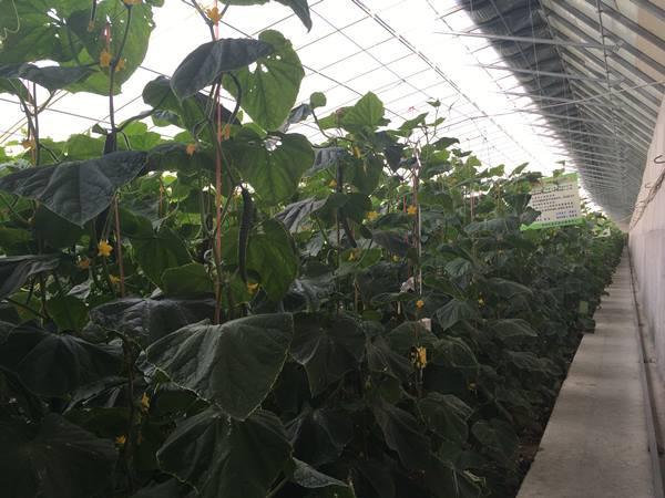 สวนอุตสาหกรรมการเกษตรสมัยใหม่แห่งทะเลทรายโกบีและเขตทดลองการเกษตรสมัยทันเมืองจ่งไจ้ ภาพเมื่อวันที่ 17 ก.ย. 2017 (ภาพ MGR ONLINE)