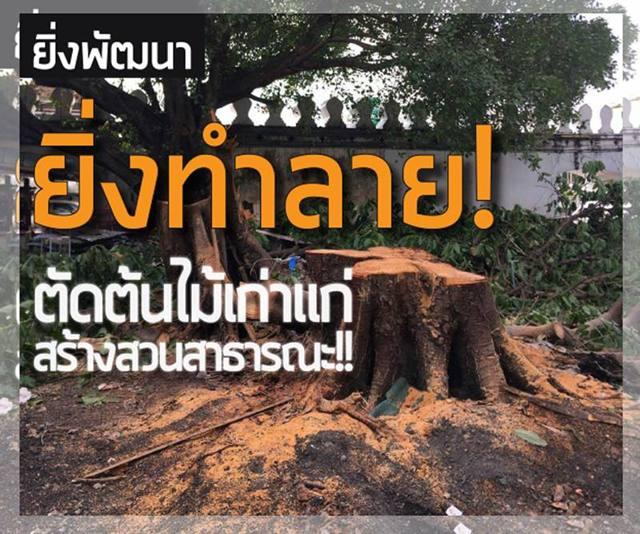 ยิ่งพัฒนา-ยิ่งทำลาย! ตัดต้นไม้เก่าแก่-สร้างสวนสาธารณะ!!