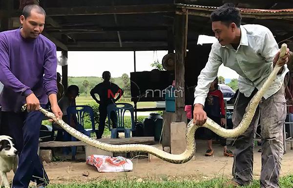 ชาวบ้านจับงูเหลือมตัวยาวเกือบ 3 เมตร หลังเลื้อยติดกับที่ล้อมคอกไก่เอาไว้