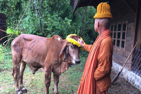 """ชาวโซเชียลสุดซึ้ง """"สาวใหญ่บุรีรัมย์"""" จำใจขายวัวแสนรัก ช่วย""""พ่อ""""ป่วยหนัก - ผู้ใจบุญระดมเงินไถ่ชีวิต"""