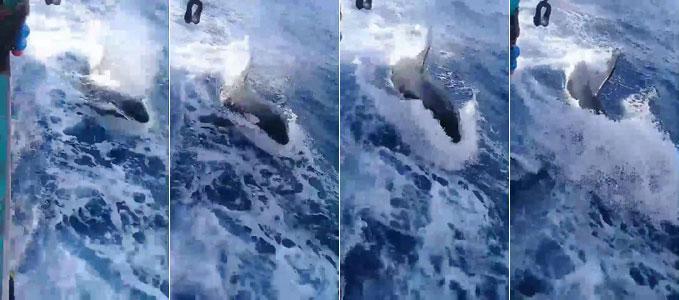 """ตื่นตา! พบ """"วาฬเพชฌฆาต"""" กลางน่านน้ำอันดามัน [ชมคลิป]"""