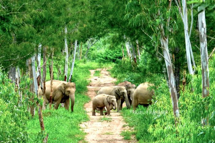 """""""กุยบุรีโมเดล""""...""""คน-ช้างป่า""""อยู่ร่วมกันได้ ใต้ร่มพระบารมี ในหลวง ร.๙/ปิ่น บุตรี"""