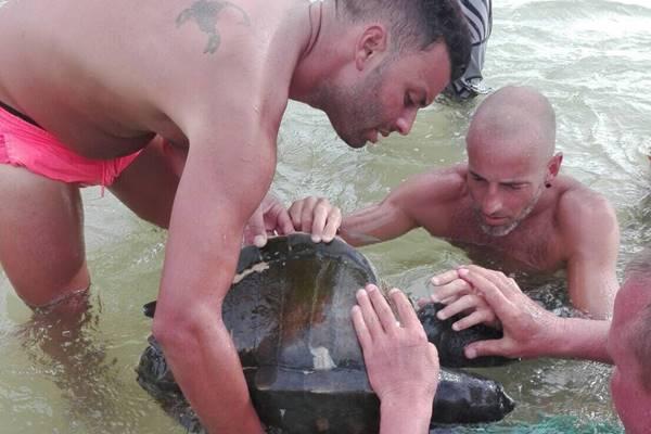 หล่อใจบุญ ! นนท.ช่วยเหลือเต่าทะเลติดเศษอวนถูกคลื่นซัดเกยตื้นหาดในหาน
