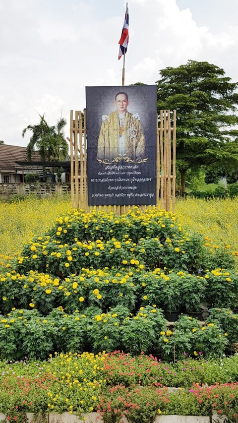 หลายหน่วยงานใน จ.ภาคกลาง- ตะวันออก พร้อมใจปลูกดอกไม้สีเหลือง   และดาวเรืองดอก