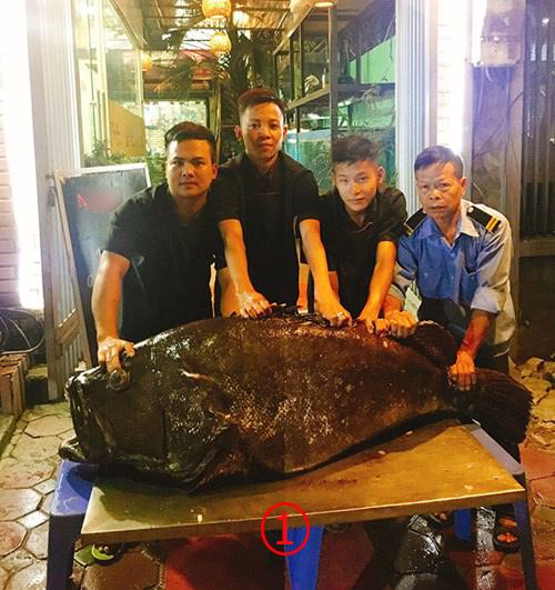 ปลาหมอยักษ์หนัก 105 กก.จากทะเลอ่าวไทย บินไปร้านอาหารเปิบพิสดารในฮานอย