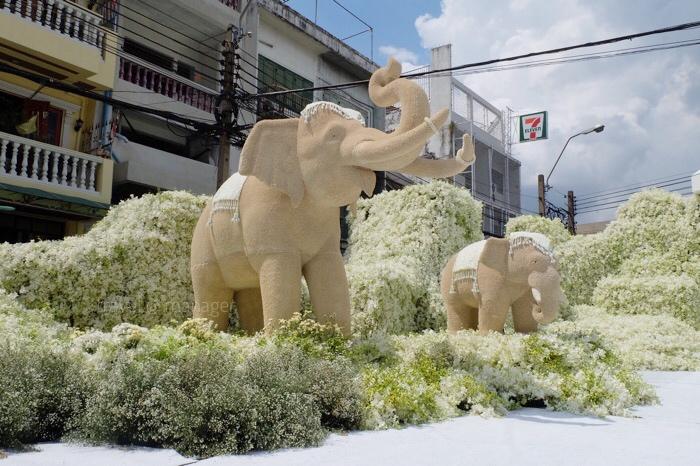 ช้างเผือกที่ตกแต่งด้วยดอกมณฑารพ