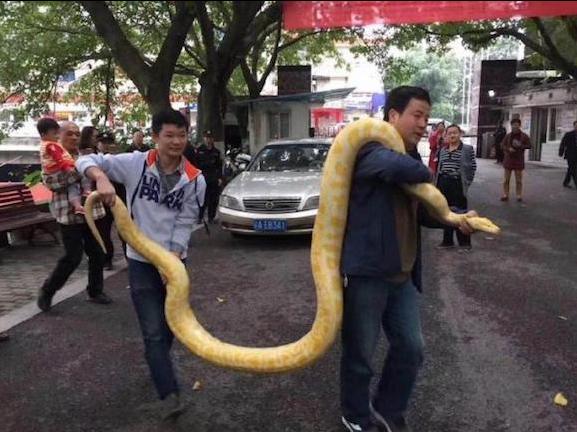 โตเกิน เจ้าของส่งงูหลาม ให้สวนสัตว์ช่วยเลี้ยงต่อ