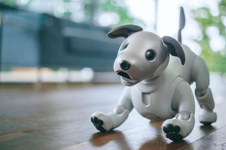 """แบ๊ว! โซนีโผล่น้องหมาหุ่นยนต์ """"ไอโบ้"""" รุ่นใหม่"""