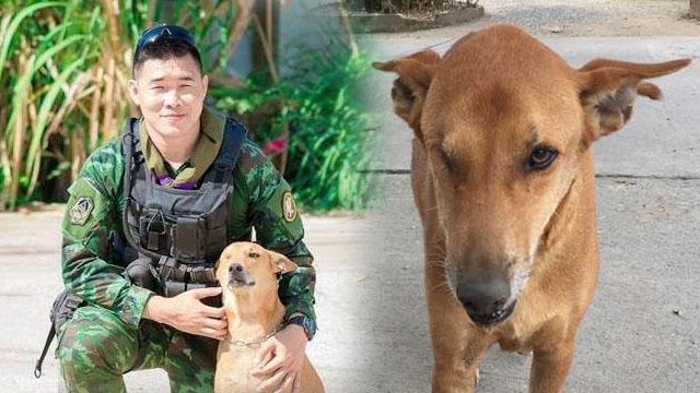 """""""เรดาร์"""" สุนัขบ้านที่ช่วยทหารชายแดนใต้ลาดตระเวนเสียชีวิตแล้ว"""