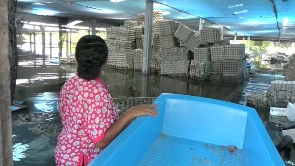 คนเลี้ยงจิ้งหรีดวอนรัฐช่วยพักชำระหนี้ หลังน้ำท่วมหนักเสียหายกว่า 3 แสน