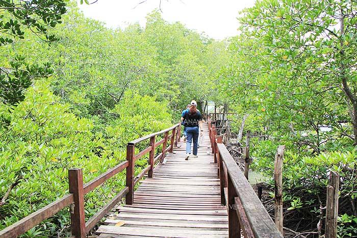เส้นทางเดินชมป่าชายเลนอันอุดมสมบูรณ์
