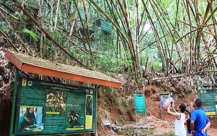 นักท่องเที่ยวมาเที่ยวชมชะนีที่โครงการคืนชะนีสู่ป่า