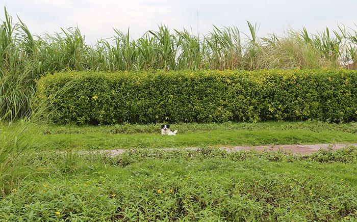 สัตว์เลี้ยงก็เข้ามาวิ่งเล่นได้ แต่เจ้าของต้องคอยช่วยดูแลความสะอาดด้วย