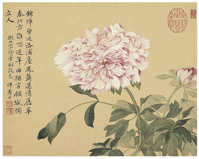 ภาพดอกโบตั๋น วาดโดย ยุ่น ซ่าวผิง (惲壽平), 1633-1690 จิตรกรสมัยราชวงศ์ชิง
