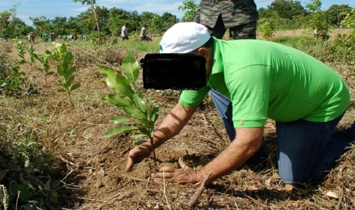 (ภาพประกอบจากแฟ้ม) การปลูกป่าโดยไม่คำนึงถึงความหลายทางระบบนิเวศและธรรมขาติ ก็เปรียบเสมือนเอาหนอนตัวแบนนิวกินีเข้าไปใส่ในตัวหอย