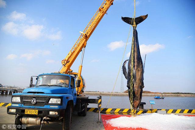 ช่วย 3 ครั้งไม่รอด! วาฬหลังค่อมเกยหาดเสียชีวิต