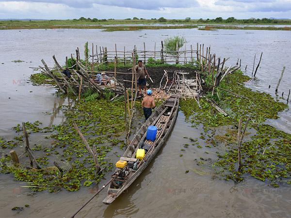 ชาวบ้านผู้เลี้ยงควายปล่อยทุ่งเลน้อย ต่างอพยพสัตว์หนีน้ำที่ท่วมในพื้นที่