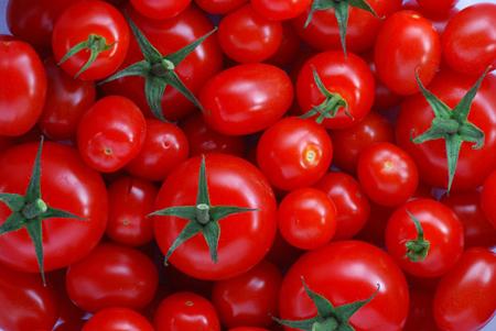 มารู้จัก พืชดัดแปลงพันธุกรรม มีข้อดี ข้อเสียอย่างไร